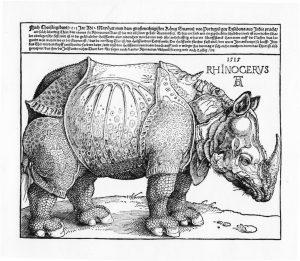 Durers Rhino 1